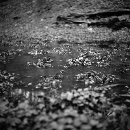 Week15_09_KodakTriX_YashicaD